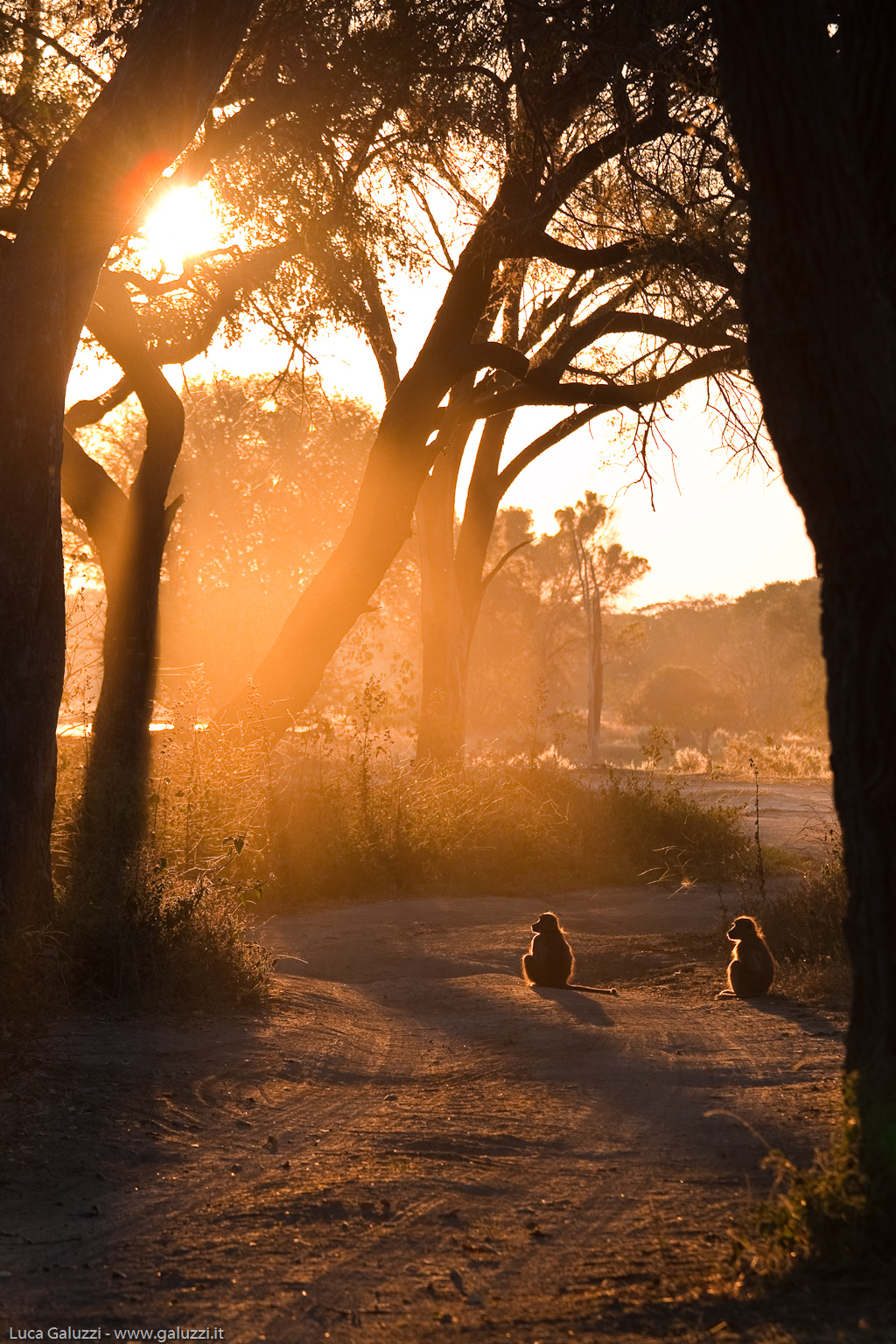 Sunrise of the Baboons